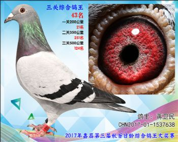 43 蒋卫民参考雌