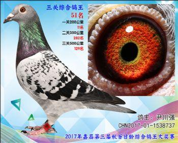 51 尹川强乔司迪诺盖比血系