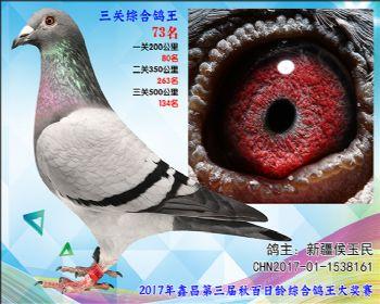 73 新疆强豪选送参考雌