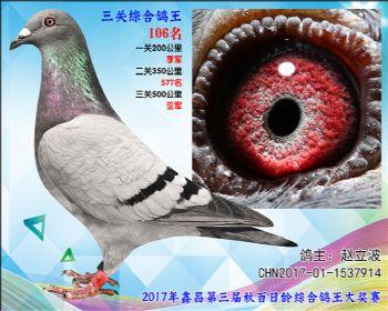 106 赵立波戈马利X胡本参考雌