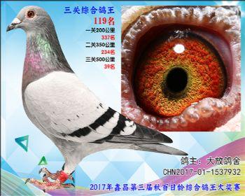 119 大放鸽舍桑杰士X速霸龙参考雄