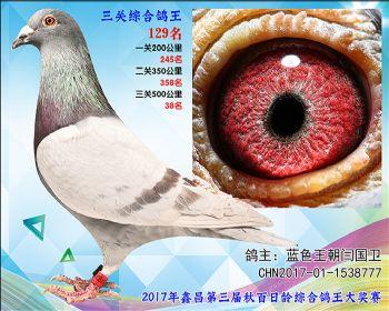 129 蓝色王朝闫国卫参考雄