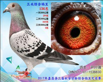 136 尹川强乔司迪诺盖比血系参考雄