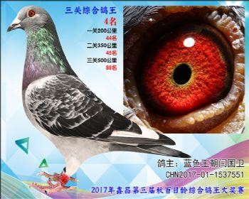 4 蓝色王朝闫国卫参考雄