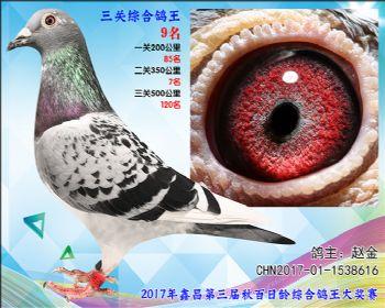 9 赵金胡本X戈马利参考雌