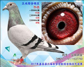25 76 宝成鸽舍胡本参考雌