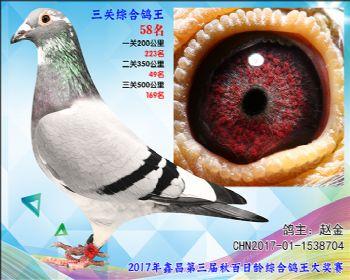 58 赵金胡本X戈马利参考雄