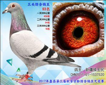 83 新疆侯玉民参考雄