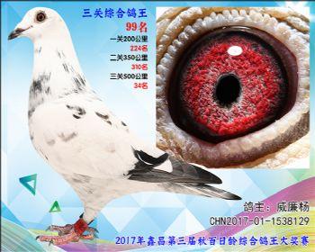 99 威廉杨参考雄