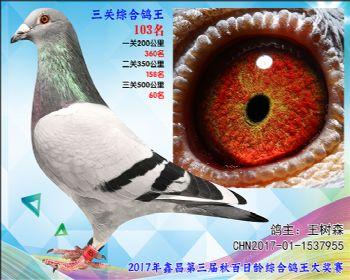 103 王树森波西瓦X东方不败血系参考雄