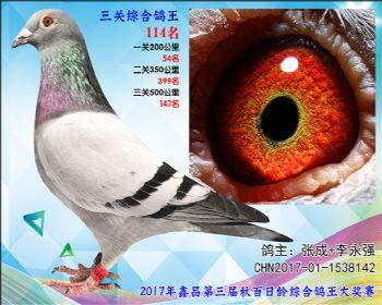 114 张成+李永强艾迪夏拉肯X赫伯特参考雄