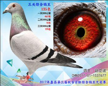 135 赵立波戈马利x 万侯参考雌