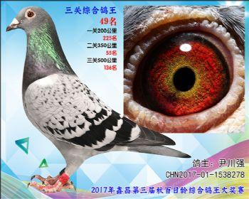 49 尹川强乔司迪诺盖比血系参考雌