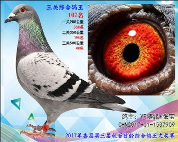 107 YF随缘+张宝考夫曼X超级73参考雌