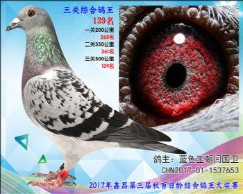 139 蓝色王朝闫国卫参考雌