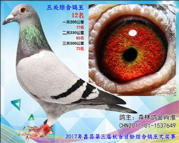 12 森林鸽舍肖淮参考雌