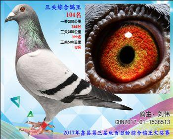 104 刘伟胡本公棚31名全同胞参考雌