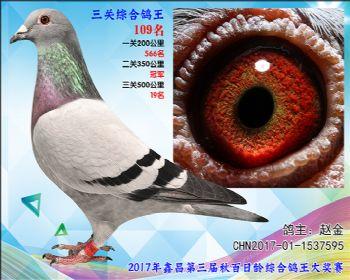 109 赵金参考雌
