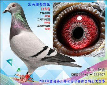 118 赵金参考雄