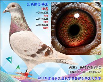 19森林鸽舍肖淮参考雌