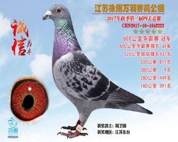 江苏万羽600公里争霸赛冠军