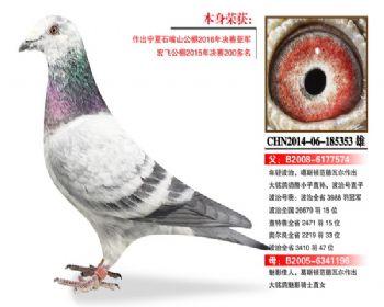 温氏鸽业102号拍卖鸽