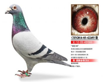 温氏鸽业106号拍卖鸽