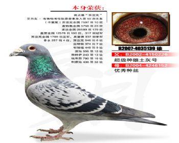 温氏鸽业108号拍卖鸽