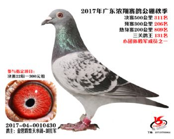 广东浓翔获奖鸽311名