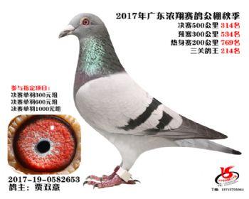 广东浓翔获奖鸽314名