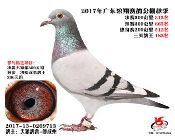 广东浓翔获奖鸽315名