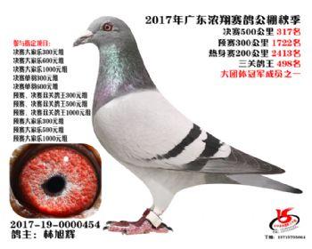 广东浓翔获奖鸽317名
