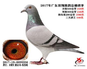 广东浓翔获奖鸽319名