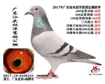 广东欣洋决赛冠军