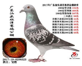 广东欣洋决赛104名