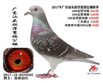 广东欣洋决赛204名