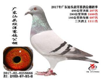 广东欣洋决赛207名