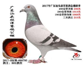 广东欣洋决赛206名