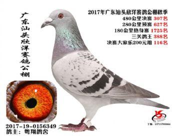 广东欣洋决赛307名