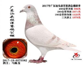 广东欣洋决赛306名