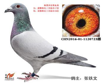 6.杨龚多拉斯血系.1120723