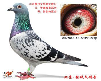7.安华鸽业种鸽.0333013