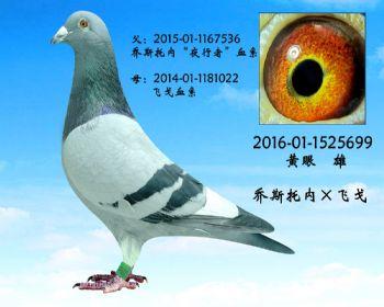 18.乔司托内x飞戈.1525699