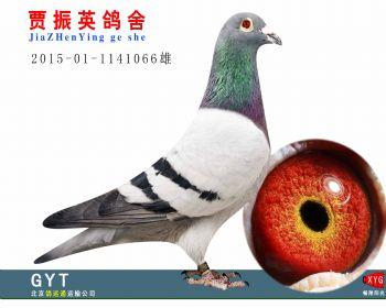 速霸龙2015011141066雄