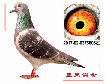 小迪克原棚 2017020375806 雄