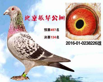 北京振华公棚决赛134名 2016010238226 雄