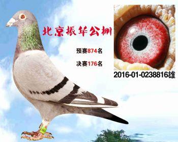 北京振华公棚决赛176名 2016010238816 雄