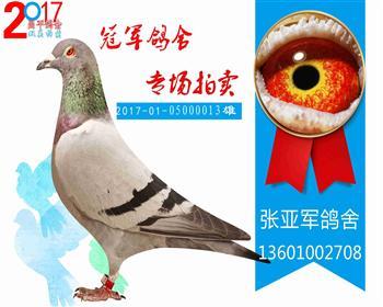 """小""""蔑世""""昌平特比19名 20170105000013 雄"""