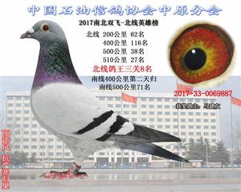 南北双飞赛事精品鸽0069887