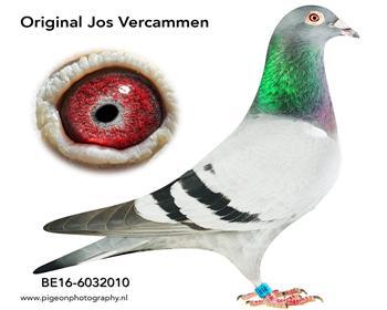 9乔斯佛卡门BE16-6032010